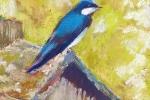 SLH-swallow on birdhouse-wb