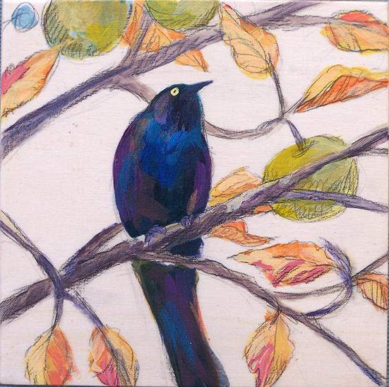 SLH-blackbird-wb