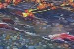 SLH-Salmon.stream-wb