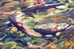 slh-circlingfish-wb
