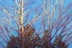 wintertree-wb